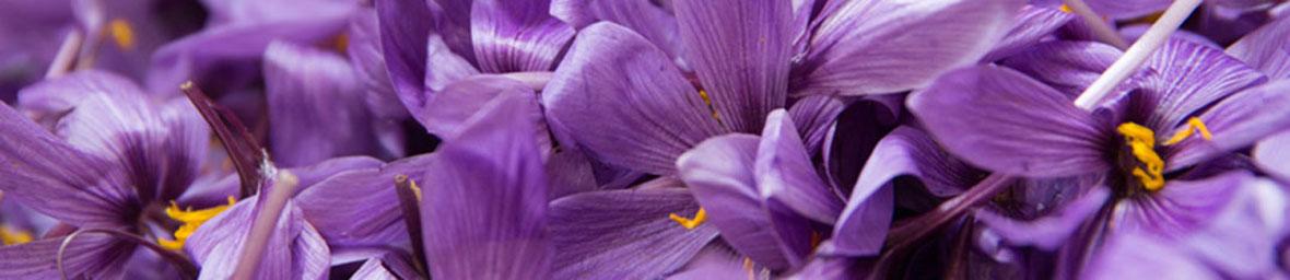 Flores del Azafrán. Venta de azafrán en Toledo. Madridejos